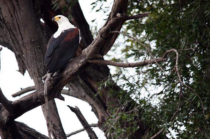 Between Zambesi and Okavango 14 Day Tour