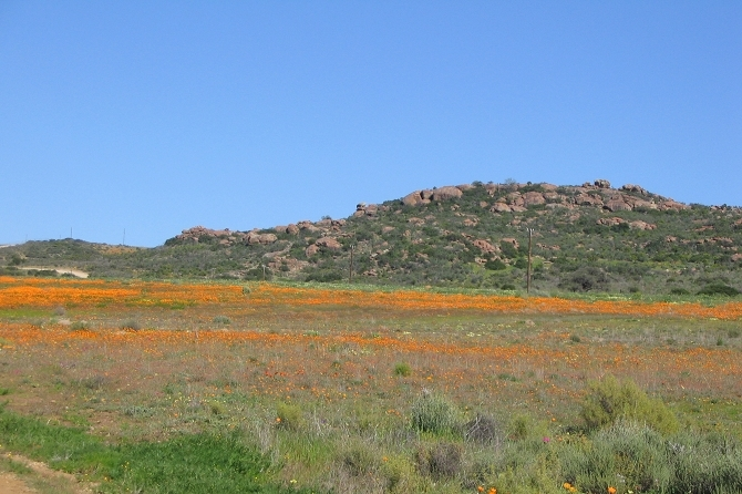 Springtime in the Succulent Karoo 11 Day Tour