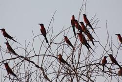 Birding near Kavango