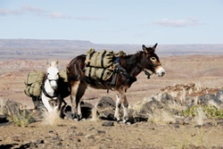 Mule trekking