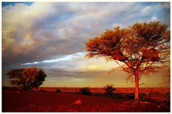 Beautiful Kalahari vistas