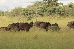 Mahango National Park